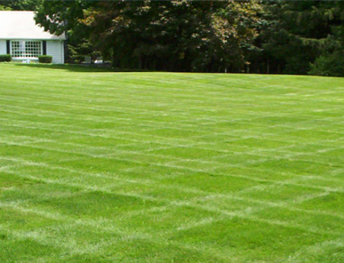Tips for a Healthy Lawn and Garden