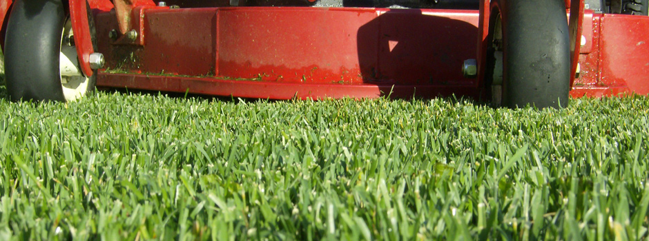 Morris County Lawn Treatments
