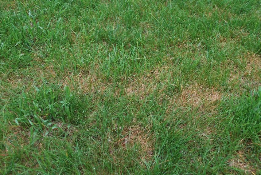 Lawn Fungus Njlawncare Removing Lawn Fungus